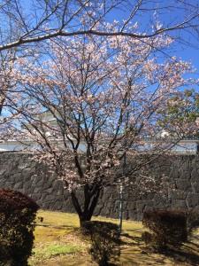 春はもうすぐですね!